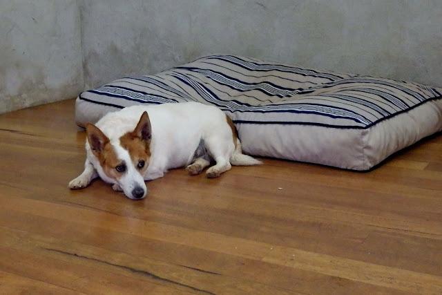 Hund, Cape Naturaliste, Vineyard, MargaretRiver, Weintour, Cellardoor, Weingut