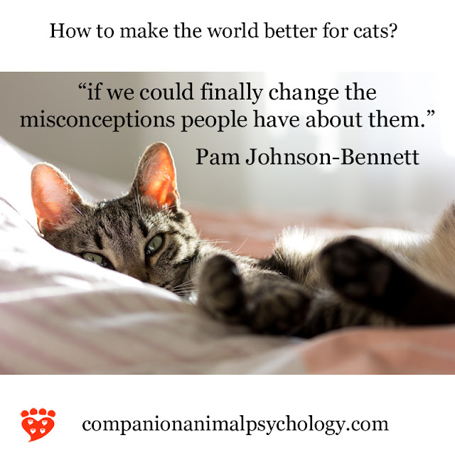Change misconceptions about cats; a cute cat peeks up from the bed