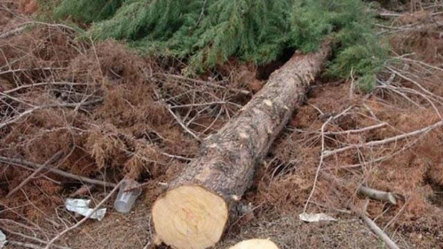Αρκαδία: 73χρονος έχασε τη ζωή του από δέντρο που έκοβε