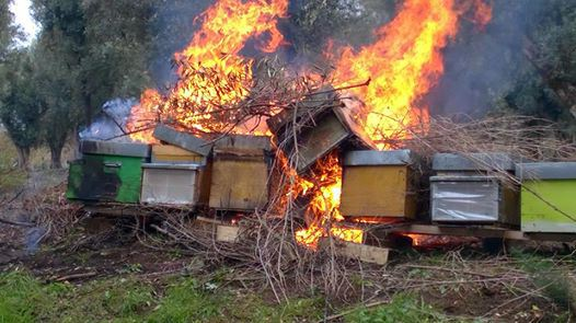 Νέο κρούσμα: Έκαψαν 50 μελίσσια στον Μπράλο