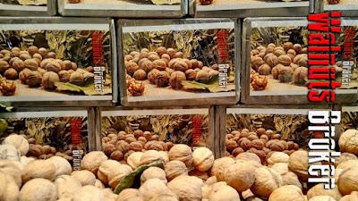 Скороплодный грецкий орех. Семена готовы к оправкам.  Walnuts Tree