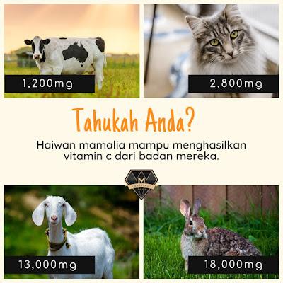 Haiwan Hasilkan Vitamin C