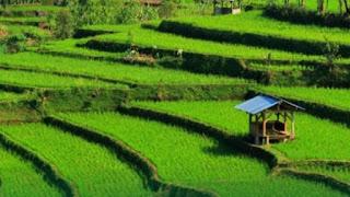 Sektor Pertanian Jauh Dari Ideal, Karena Kurang Diminati