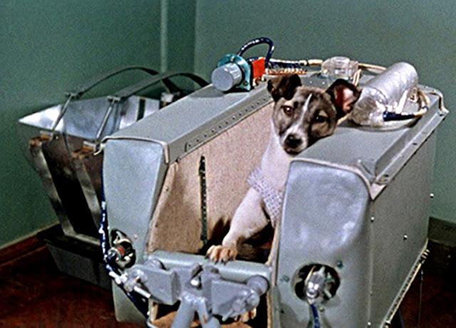Laika, primeiro ser vivo enviado para o espaço