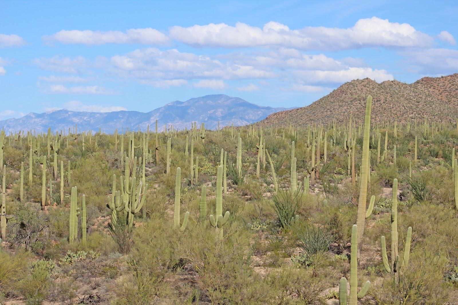 saguaro national park day trip 19