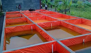 ternak lele sangkuriang kolam terpal,analisis usaha budidaya lele kolam terpal,cara budidaya lele kolam terpal lengkap,pembuatan kolam terpal ikan lele,