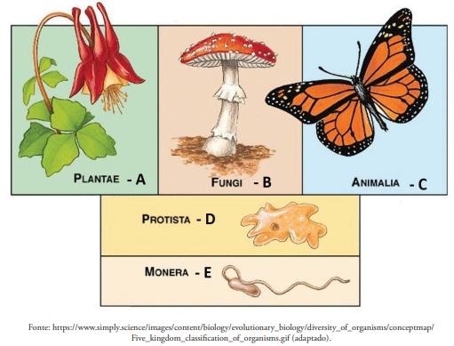 FDSBC 2020: A figura a seguir contém ilustrações de organismos pertencentes a reinos diferentes.