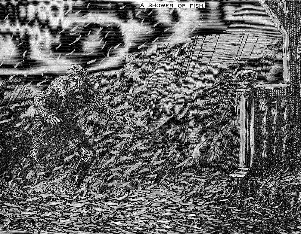 an 1876 illustration, waterspouts suck up schools of fish and rain them down