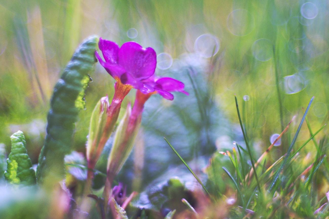 Bilder der Woche #52 (KW52/2020) – Erste Frühlingsboten
