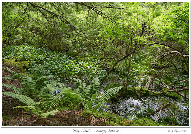 Tully Trail: ... swampy lushness...