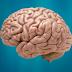 How to Explain Brain Physciology