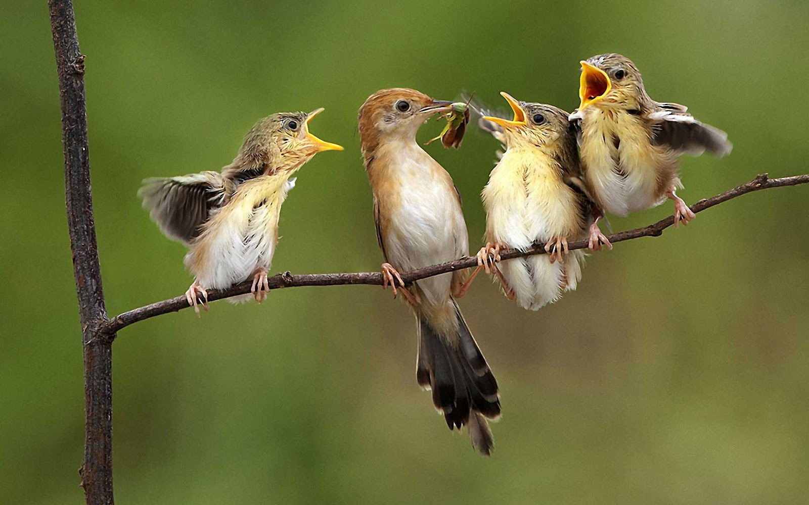 Baby Birds HQ Photo Wallpapers Cute Wallpapers