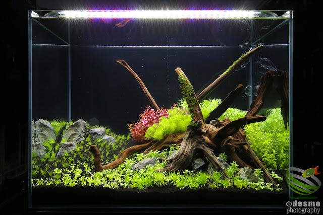 60cmH水草水槽