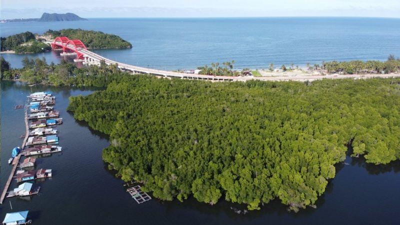 Hari Air Sedunia: Hutan Perempuan di Papua, 'surga kecil yang dirusak manusia