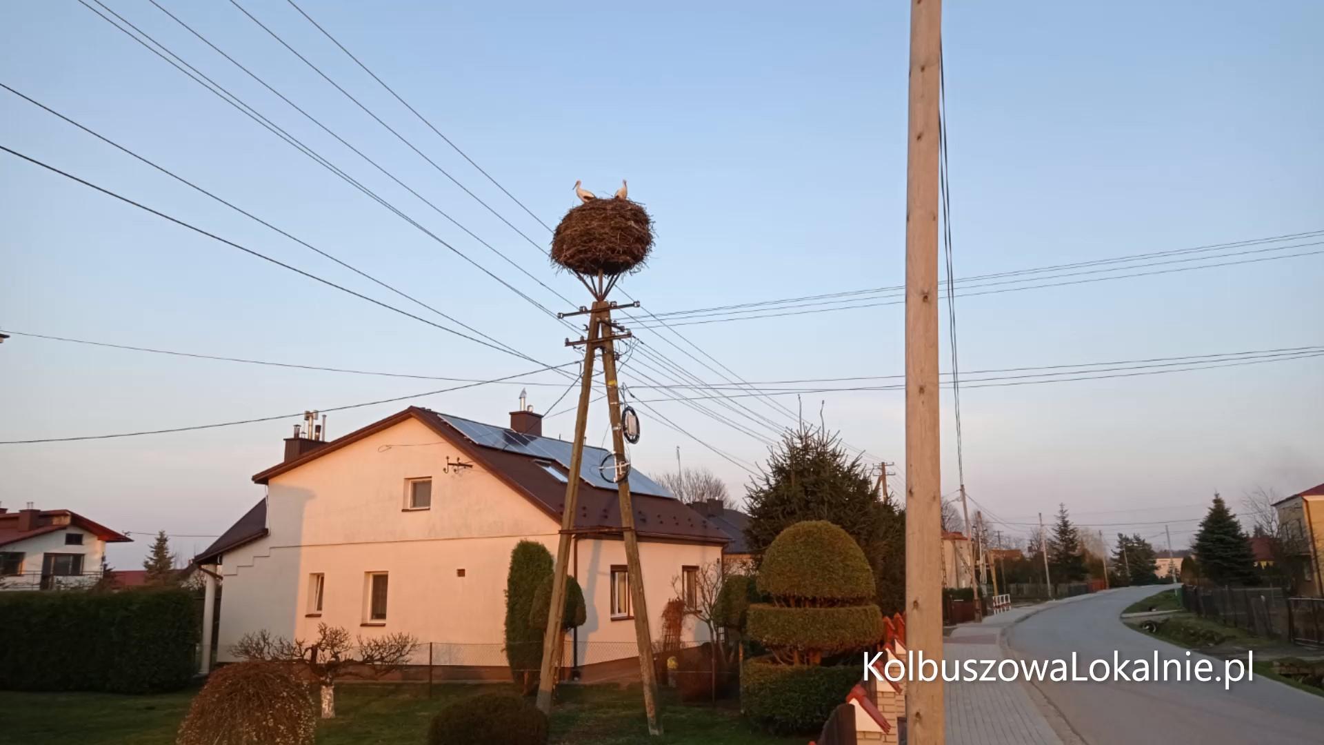 Bociania rodzina już w Zarębkach [FOTO, WIDEO]