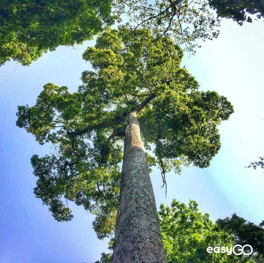 kinh nghiệm đi rừng Cúc Phương