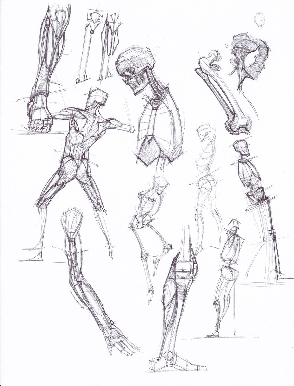 figuredrawing.info news: Sketches from my recent trip to Anatomy tools