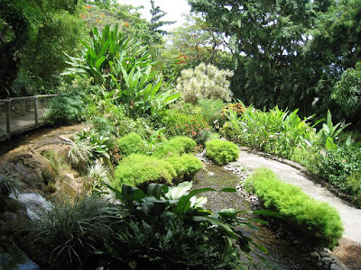 Un semblant de jardin japonais du côté des bambous