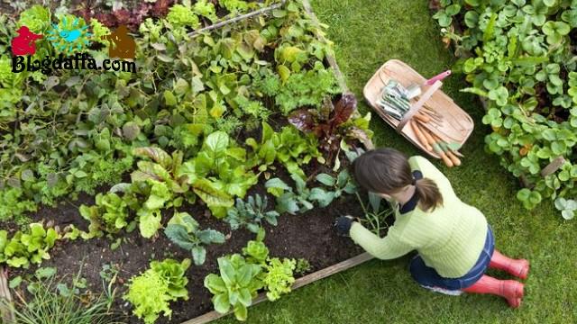 Desain kebun sayur mini kreatif dan sederhana di rumah