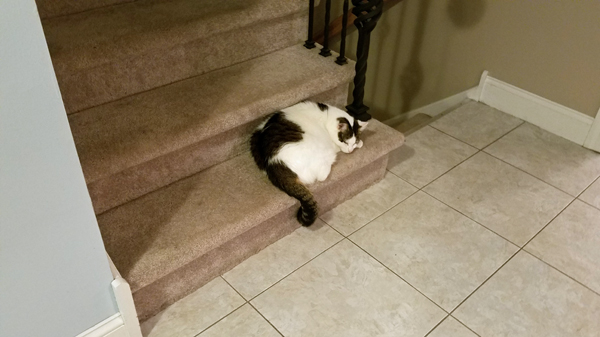 image of Olivia the White Farm Cat napping on the stairs