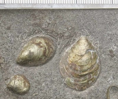 http://sciencythoughts.blogspot.co.uk/2013/09/opportunistic-bivalves-during-early.html