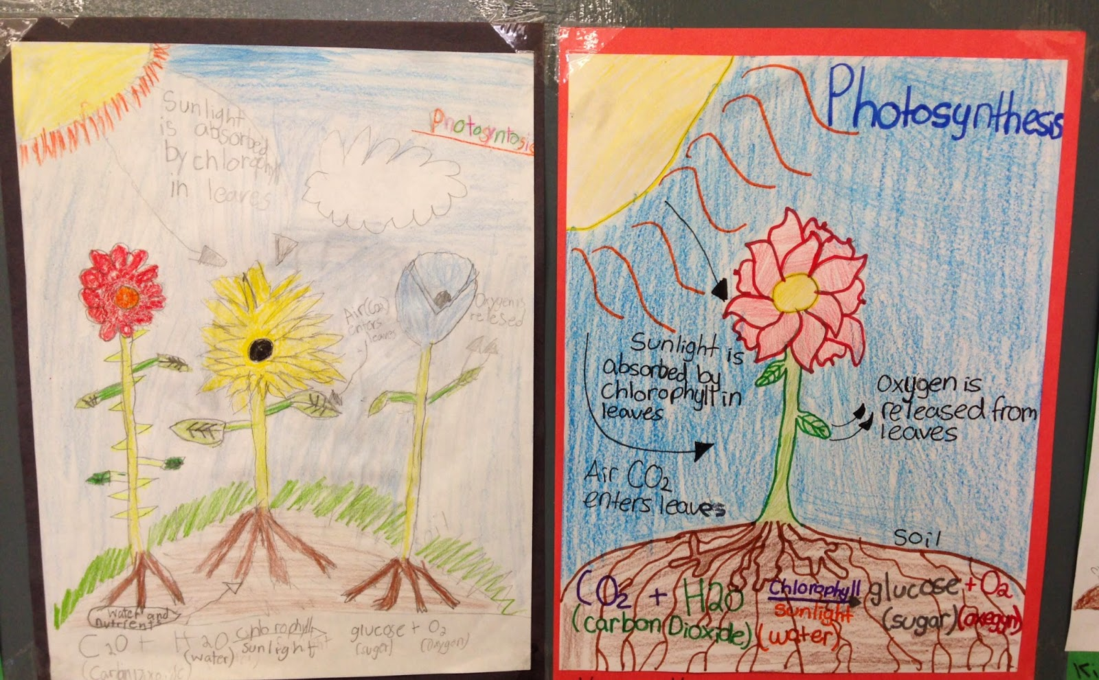 Photosynthesis Process Diagram For 5th Grade Two Light Wiring Wit And Whimsy Fun With