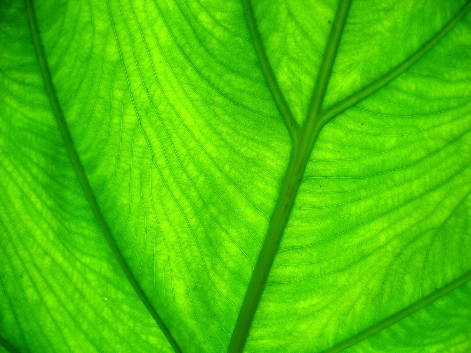Groene achtergronden hd wallpapers for Green pflanzen