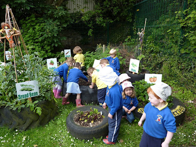 Proyectos ecológicos para escuelas