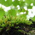 General Characters of Bryophytes