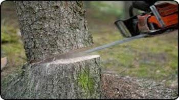 भोपाल में पेड़ काटने पर एक लाख का जुरमाना