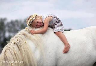 صور حصان , صور خيول عربية أصيلة , صور خيل