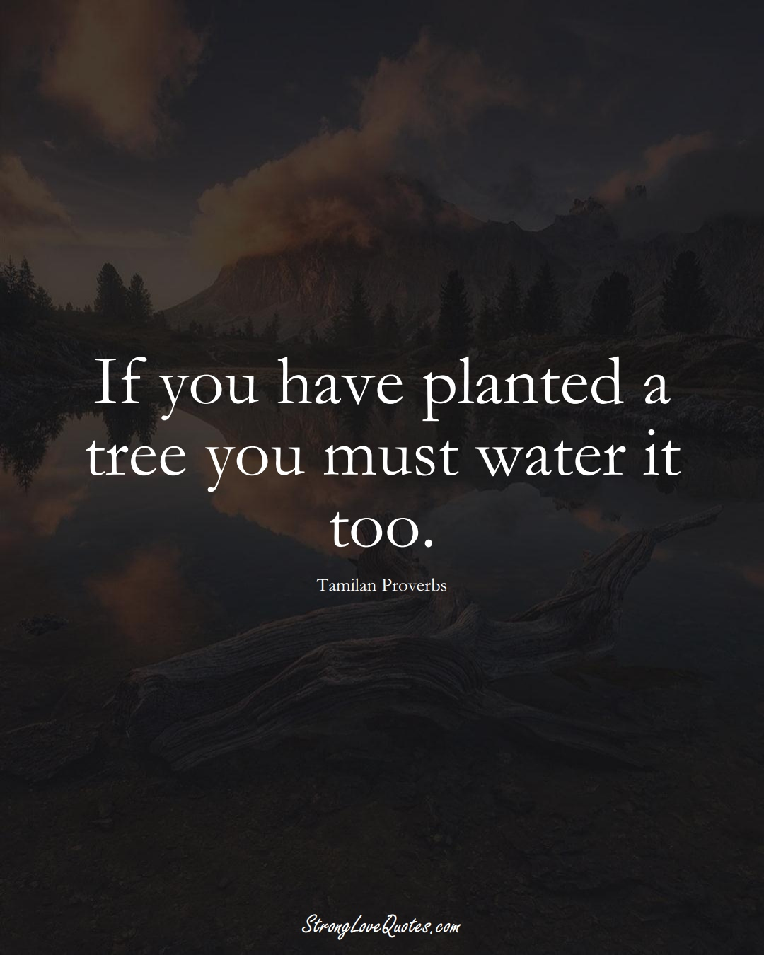 If you have planted a tree you must water it too. (Tamilan Sayings);  #aVarietyofCulturesSayings