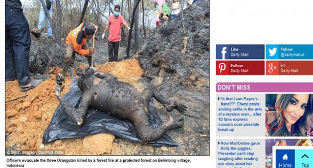 3 Orang Utan Terpanggang di Hutan Bontang Jadi Sorotan Dunia