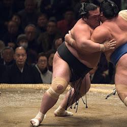 Сумо – традиции и современность японской борьбы