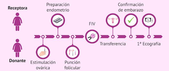 Ciclos de Reproducción Asistida: Ovodonación 2