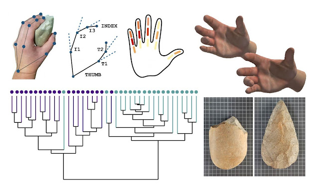 Study analyzes ergonomic relationship between hand and Lower Palaeolithic tools