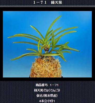 http://www.fuuran.jp/1-71.html