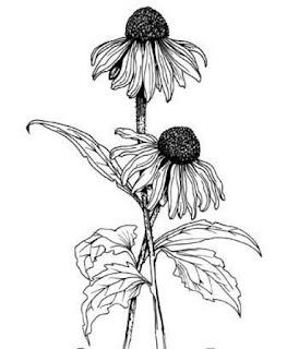 Sketsa Bunga Hitam Putih
