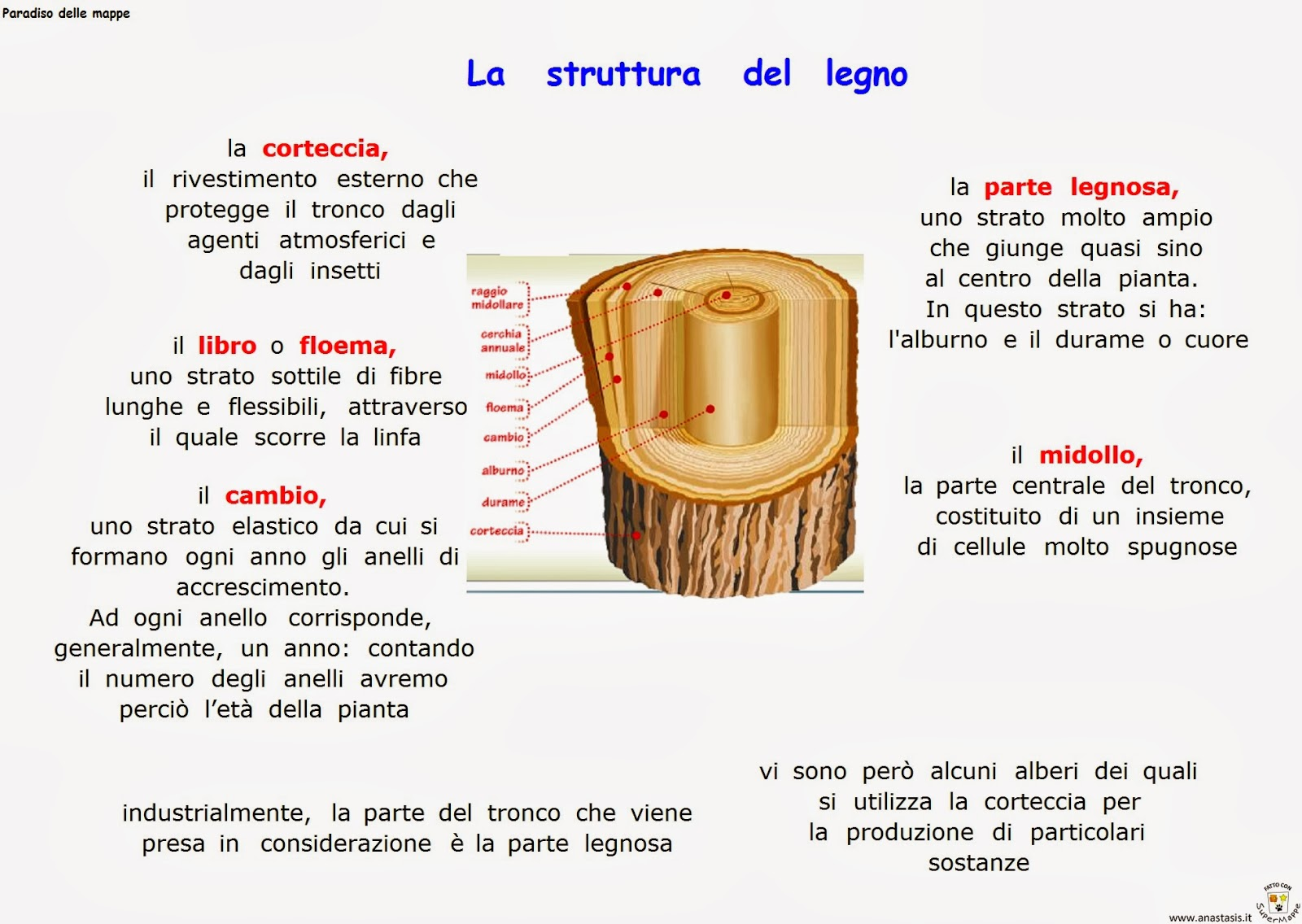 Le Fibre Del Legno paradiso delle mappe: la struttura del legno