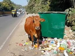 cow-mother-in-india