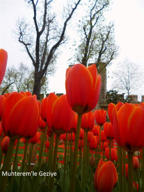 istanbul tulips festival