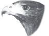 contoh adaptasi pada burung elang