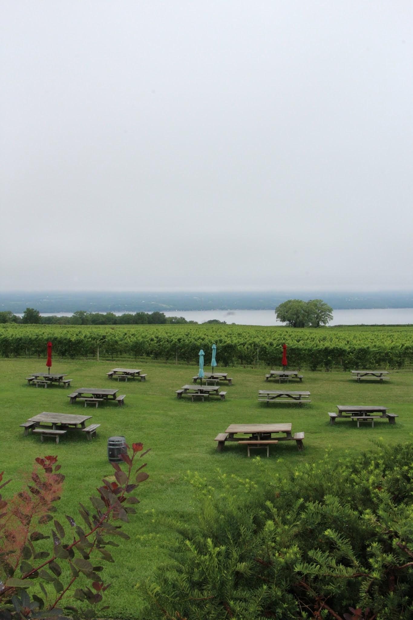 Seneca lake, vineyard, wine tasting, wine tour