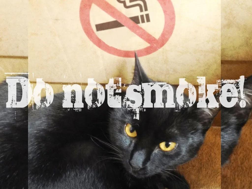 アイキャッチ:タバコはお断りします…な猫ちゃん。