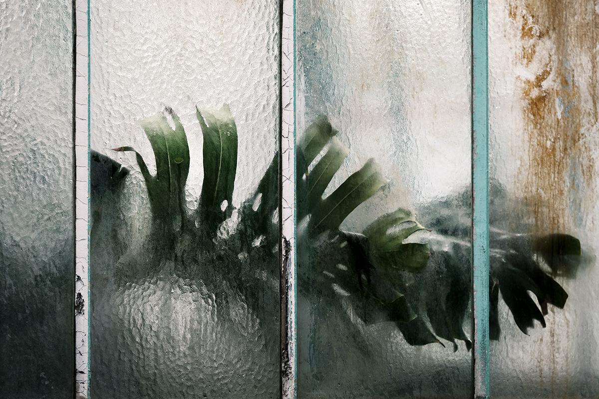 Fiorire dietro le finestre