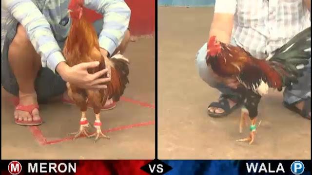 Cách xem Đá gà trực tiếp