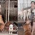 Mujer adoptó a más de 1,000 perros que rescató de carniceros durante la pandemia COVID-19