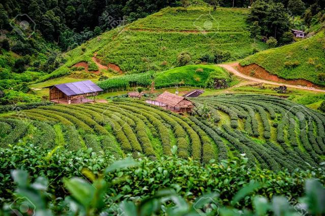 1. Doi Ang khang in Thailand