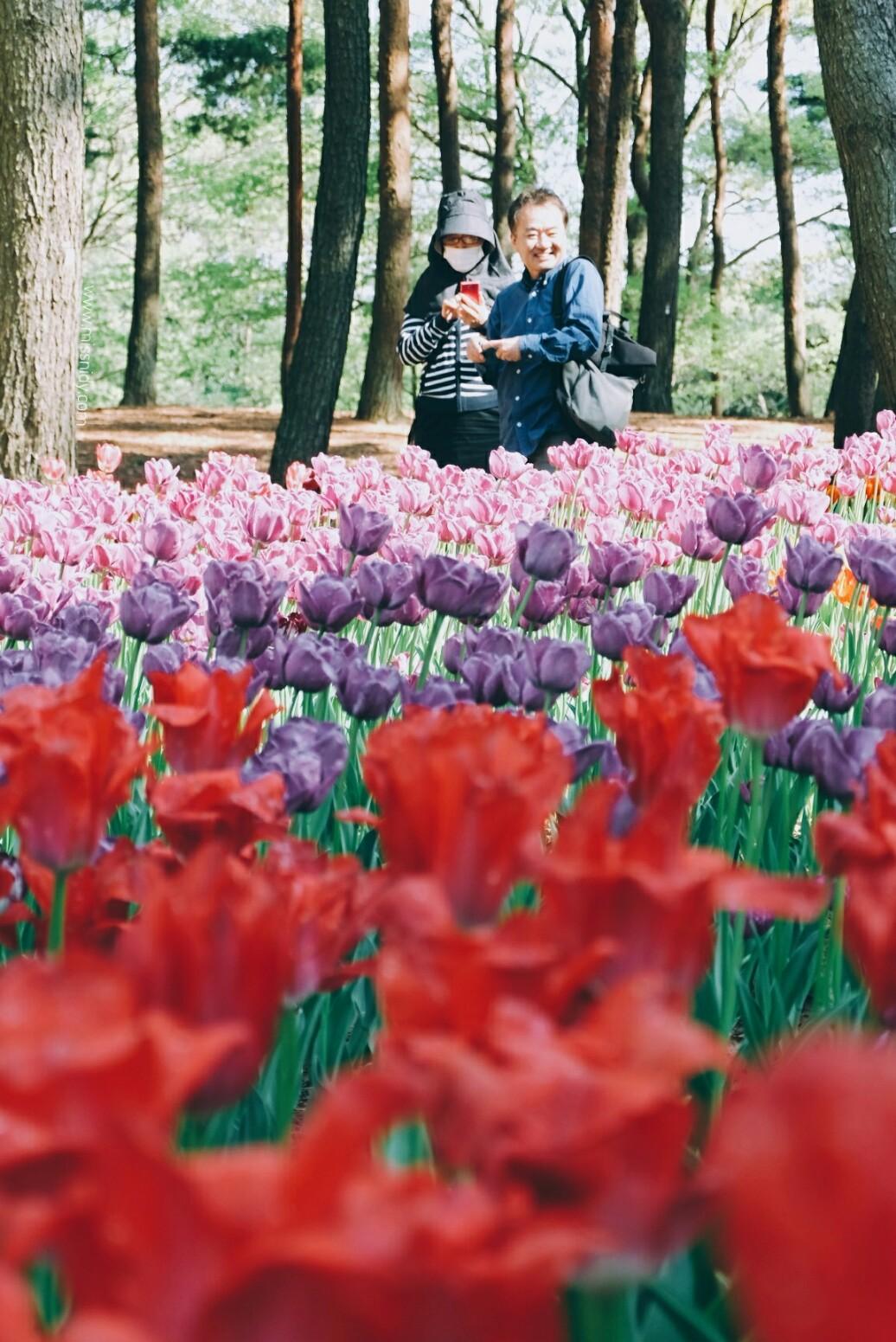 japan in late spring