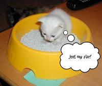 kattenbakvulling voor kittens